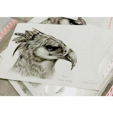 Harpia - Reprodução Fine Art