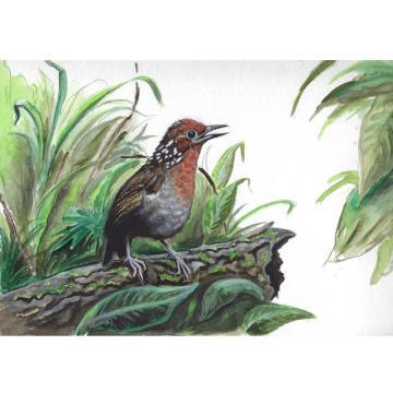 Uirapuru - Imã pequeno
