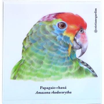 Papagaio-Chauá - adesivo em papel