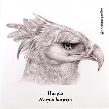 Harpia - adesivo em papel