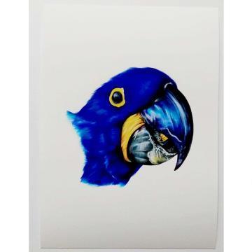 Arara-Azul - Reprodução Fine Art