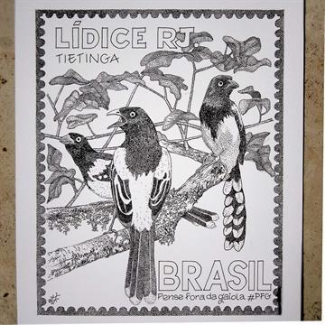 Tietinga - Mario Barata - Reprodução Nanquim