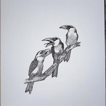 Tucanos - Mario Barata - Reprodução Nanquim