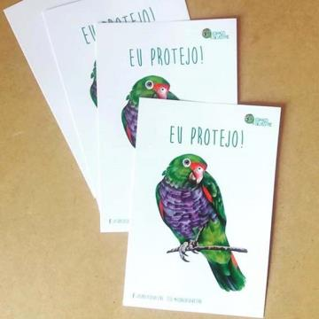 Papagaio-de-Peito-Roxo - adesivo em papel