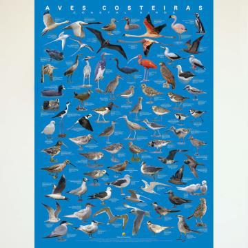 Pôster Aves Costeiras